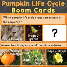Life Cycle Of A Pumpkin Seed Worksheet by Pumpkin Life Cycle Boom Cards Free Life Cycle Stages Of A Pumpkin