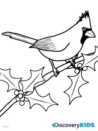 Activity Cardinal Coloring Page Print