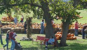 Pumpkin Patches Near Dallas Tx 2015 by 5 Pumpkin Patches You Can U0027t Miss This Fall Texas Hill Country