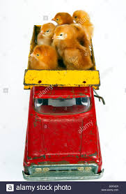 Chicken Poultry Truck Stock Photos & Chicken Poultry Truck Stock ... Fleetwatch Home Facebook Tank Hauling Stock Photos Images Alamy Ord Nebraska Blog Archive 2018 Farmers Market Season Farmers Insurance Chicago Alan Sussman The Best Businses And K0rnholio Screenshots Truckersmp Forum Great American Truck Race On The Workbench Big Rigs Model Cars Serving Your Grain Agronomy Seed Needs Elevator Of Kendall Trucking Co Root Cellar Organic Cafe Competitors Revenue Employees Leyland Trucks Utes Just Keep On Trucking In Satisfying Mens Driving Stincts