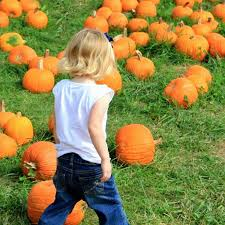 Pumpkin Festival 5k Milford Nh by New England Fall Events October 2016