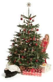 65 Ft Christmas Tree by Glendalough Christmas Tree Farm Real Christmas Trees Christmas