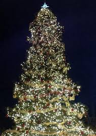 The 45 Foot Christmas Tree At The Christmas Market Entry