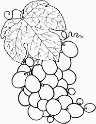 Fruit Berries Coloring Pages Summer Fruits And Vegetables Free Printable Basket Pictures Print