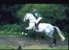 Highly Recommended Vaccinations For Your Horse - Expert How-to For ... Meadows Equestrian Center On Equinenow 96 Best Vet Books Images Pinterest Horses The Horse And A5f1895b8566a63e9b0f3f2269a3cfaae57a8ajpg Dressage In Faraway Places Today Full Clinic Anchorage Ak Chester Valley Veterinary Hospital Blog Archives Mountain Homes 4 Horse Country 2 2014 Digital By Linda Hazelwood Issuu Nottingham Equine Colic Project 25 Cozy Bed Barns Horserider Western Traing Howto Advice Best Ranch Vacations Of The West American Cowboy