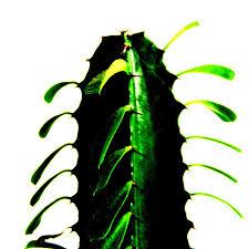 unser kaktus im badezimmer foto bild pflanzen pilze