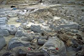 Ashfall Fossil Beds State Historical Park by A First Timer U0027s Guide To Nebraska Must See Historic Landmarks