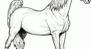 Horse Head Coloring Pages To Print Archives Cool