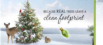 Christmas Tree Cataracts Causes by Wi Real Christmas Trees Wctpa Farm Grown Wholesale Retail Cut