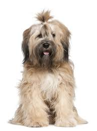 Non Shedding Dog Breeds Small by Small Dog Breeds The Ultimate Resource Guide The Smart Dog Guide