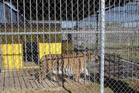 Iberville Parish | Free Tony The Tiger