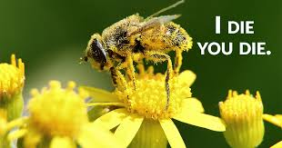 from big box stores to organic boutiques bee killing pesticides