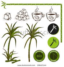 Sugarcane Plant Stock Images Royalty
