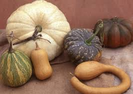 Types Of Pumpkins And Squash by Winter Squashes Sea Spring Seeds