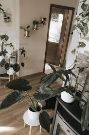 instagram wingardium levanessa home interior plants