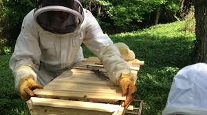 BackYardHive : Bee Hives And Beekeeeping Supplies For Sale Bkeeping Equipment Decisions Kenyan Top Bar Hive Part 1 How To Transfer Brood Comb From Langstroth Frames A New Top Bar Che Guebee Apiary Heaven Building Our Hives Ipdence Homestead Musings On Hives For Economical Bee Keeping Make Youtube Culvating Change Agriculture And Food Security Blog Topbar Beehive Making Sustainable Life Getting Started In Your First Year As Management Pdf For Sale Boardman Feeder Talking With Bees