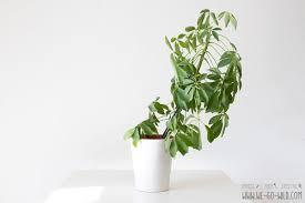 12 pflegeleichte zimmerpflanzen die unzerstörbar sind we