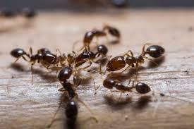 Kitchen Kitchen Ants Beautiful Home Design With Kitchen