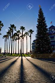 Krinner Christmas Tree Genie Xxl Deluxe by Cluster Of Palm Trees And A Christmas Tree Casting Shadows From