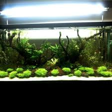 Interior Marvellous Small Planted Aquascaping Design Among Water ... September 2010 Aquascape Of The Month Sky Cliff Aquascaping How To Set Up A Planted Aquarium Design Desiging Tank Basic Forms Aqua Rebell Suitable Plants With Picture Home Mariapngt Nature With Hd Resolution 1300x851 Designs Unique Hardscape Ideas And Fnitures Tag Wallpapers Flowers Beautiful Garden Best 25 Aquascaping Ideas On Pinterest From Start To Finish By Greg Charlet