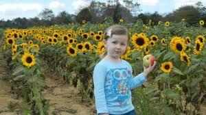 Pumpkin Picking Long Island Ny by Fun Fall Activities On Long Island