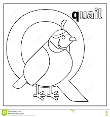 Royalty Free Vector Download Quail
