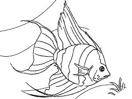 Coral Reef Angel Fish Colouring Page Coloring