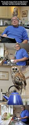 Best 25+ Owl Pet Ideas On Pinterest | Owls, Baby Owl And Cute Baby Owl 55 Best Owl Images On Pinterest Barn Owls Children And Hunting Owls How To Feed Keep An Owlet Maya A Brief Introduction The Common Types Of Six Reasons Why You Dont Want An Owl As Pet Bird Introducing Gizmo Baby Whitefaced Youtube 2270 Animals 637 Oh Meine Uhus I Love Owls My Barn Cat Baby By Disneyqueen1 Deviantart All Things Nighttime Predator Cute Animals