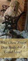 Chew Proof Dog Beds by Chew Proof Dog Bed Why They Are Important