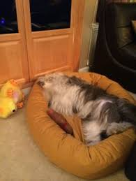 Eddie Bauer Dog Beds by Eddie Bauer Dog Coats Self Warming Pet Beds More Cozy Gift