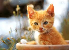 orange cat names 27 orange cat names for your kittens