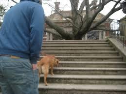Old Westbury Gardens Dog Halloween by Dog Day Finn U0026 Charley Too