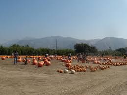 Best Pumpkin Patch In San Bernardino County by Pumpkin Palooza A Visit To The Faulkner Farm Pumpkin Patch La