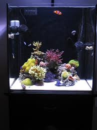 Minimalist Aquascaping - Reef Central Online Community | Aquarium ... 75 Gallon Tank Aquascape Ideas Please Reef Central Online Community Minimalist Aquascaping Page 3 2reef Saltwater And How To A Aquarium Youtube Tank Rockscape To Drill Cement Your Live Rock Gmacreef Columns In A Saltwater Callorecom Pieter Van Suijlekoms Revisited Is There Science Live Rock Sanctuary The Why I Involuntarily Redid My Mr 7