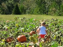 Griffin Farms Pumpkin Patch by Good Grit Magazine Must Visit Pumpkin Patches In Your State
