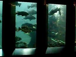 undersea gardens in victoria bc