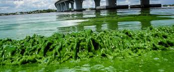 Bathtub Beach Stuart Fl Closed by Toxic Algae Blooms Infesting Florida Beaches Are Putting A Damper