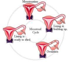 100 uterus lining shedding period jelina uterine lining