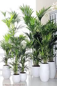 le bureau verte plante pour le bureau plantes vertes pour bureau plantes pour
