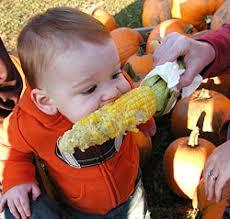 Snohomish Pumpkin Patch by Fresh Locally Grown Sweet Corn At Bob U0027s Corn Maze U0026 Pumpkin Patch