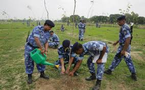 Christmas Tree Saplings Ireland by India Attempts To Set Record By Planting 50 Million Trees In 24 Hours