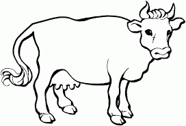 Cow Coloring Pages 14439 Label Angus Baby