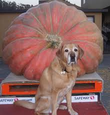 Are Pepitas Pumpkin Seeds Good For You by Through A Dog U0027s Ear Music Therapy For The Prevention And