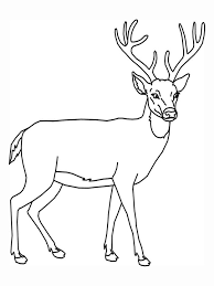 Deer Coloring Pages With Antlers