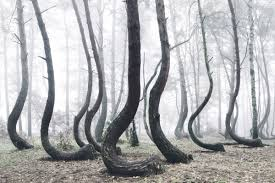 The Crooked Forest: A Mysterious Grove Of 400 Oddly Bent Pine Trees ... Expert Claims Mysterious Bent Trees Were Secret Native Americans Crooked Forest Wikipedia Stp77089 Greenery And Tree Trunks In Forest Karjat Mahashtra Indian Bent Trees History Or Legend Show Me Oz Larry The Lorry More Big Trucks For Children Geckos Garage New Trucks Bodies Equipment Trailers Seen At Wasteexpo How To Fix A Leaning Tree I Love The Wooden Beds Rarin To Go Ford Mysterious Are Actually American Trail Markers Wind Stock Images 542 Photos Bend Diamonds Ieee Spectrum Black White Alamy