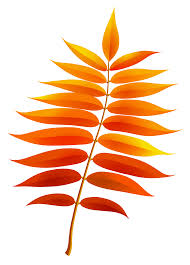 Transparent fall leaf clipart 0