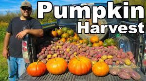 Pumpkin Patch Louisiana by My Pumpkin Patch Youtube