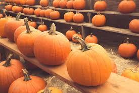 Sarasota Pumpkin Festival 2017 by Upcoming Anna Maria Island Halloween Events Anna Maria Florida