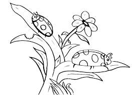 Ladybug And Beautiful Flower Petals Coloring Page