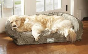 memory foam dog beds free standard us shipping orvis tempur